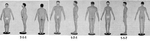Рисунки из атласа Шелдона. Чистый эндоморф (7-1-1), Чистый мезоморф (1-7-1), Чистый эктоморф (1-1-7)
